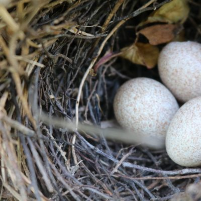 The Ache of an Empty Nest–Year Three