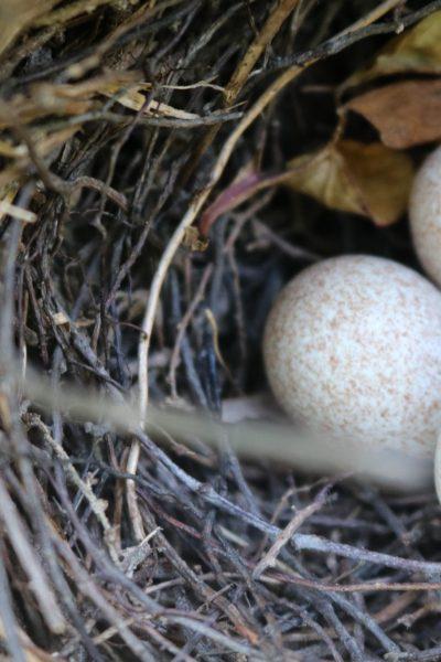 Ache of an Empty Nest